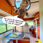 Discover Funny with Bobo Campers