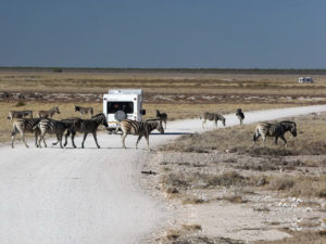 Zebra crossing on the Namibian highways