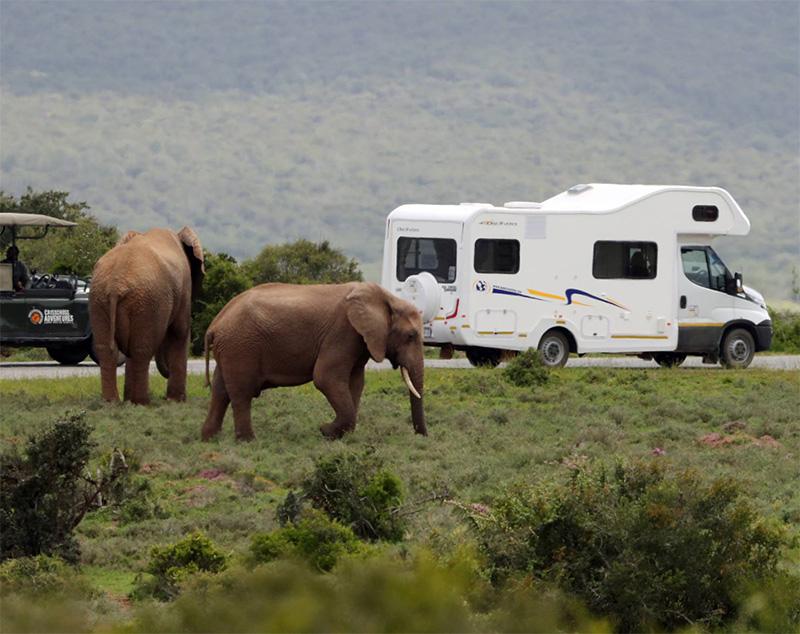 Addo Elephant Park and Discoverer 6