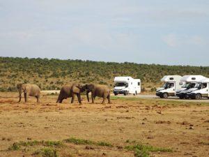 Discovering Addo Elephant \park