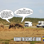 Meanwhile...back in Addo